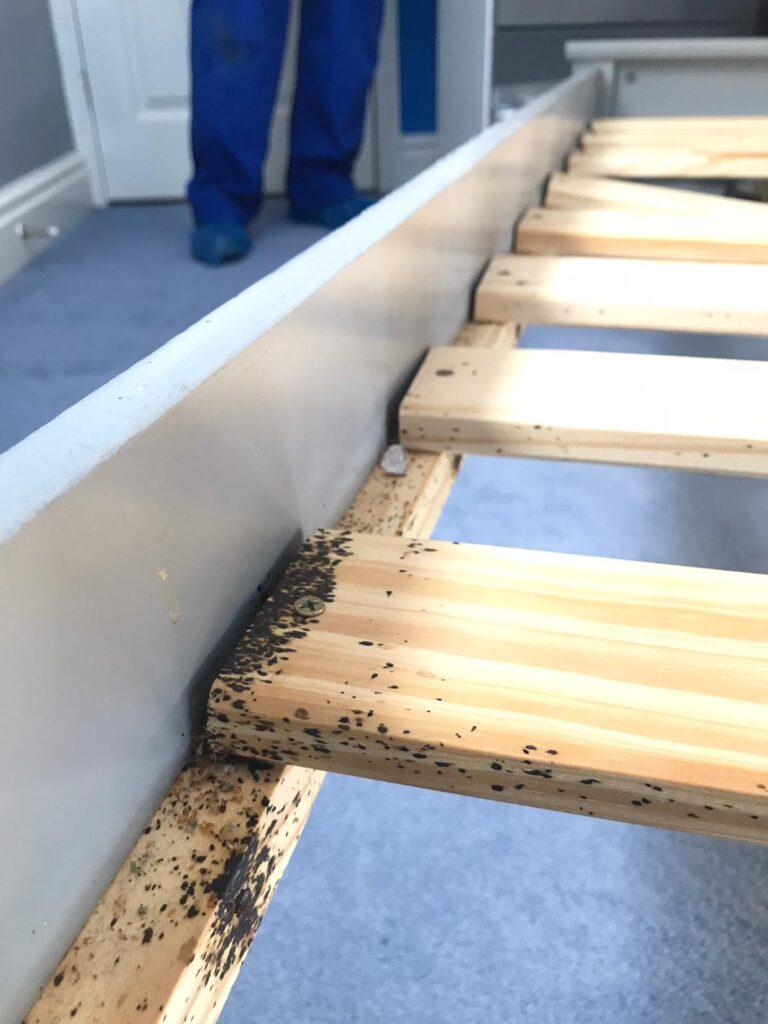Bedbug treatments Chelmsford